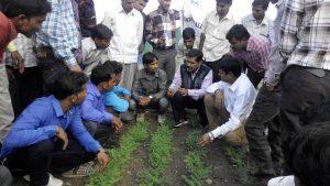 Training on Pest & Disease Identification TRAITS Madhya Pradesh